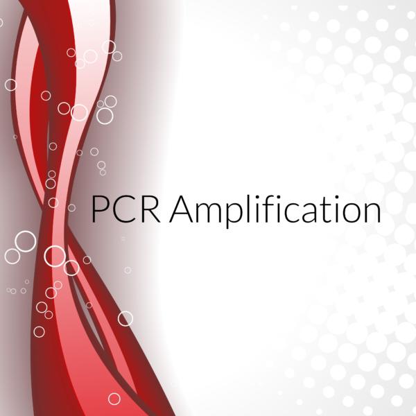 PCR amplifiction