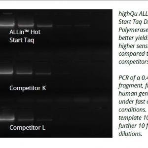 Allin hot start taq polymerase