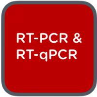 rtpcr 7